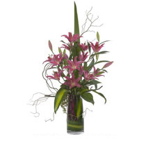 Premium Lily