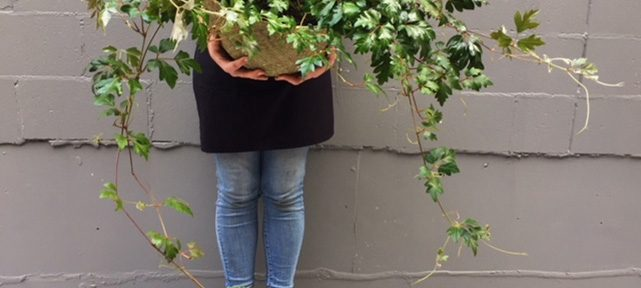 Now that's a plant - oozing out of the pot.