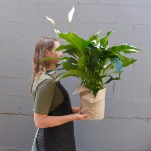 Sympathy flowers Lily